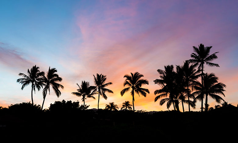ハワイでの不動産購入の流れ イメージ画像