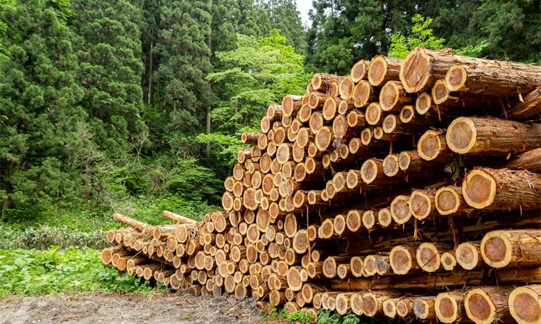 「ウッドショック」が一段落? かつてない高騰から一転、シカゴ先物市場で木材価格が急落 イメージ画像