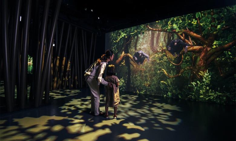 図鑑の世界を実際に体験! 体験型デジタルミュージアム『ZUKAN MUSEUM GINZA powered by 小学館の図鑑NEO』が開業 イメージ画像